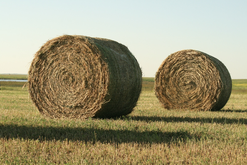 Hay Production and Sales